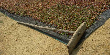Kahvenin Yolculuğu: Meyveden Çekirdeğe